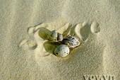 Hải âu sinh con trên đồi cát bỏng