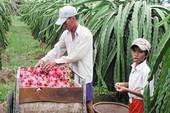Thanh long Bình Thuận được bảo hộ trên đất Mỹ