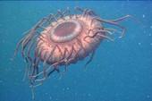 """""""Thống kê sự sống đại dương"""""""