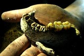 Kinh dị những bộ hàm và cuộc sưu tập răng người