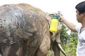 Nước mắt voi rừng - Kỳ 3: Săn đuổi tận cùng