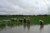 Nước mặn xâm nhập sâu 70km tại đồng bằng sông Cửu Long