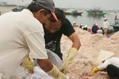 Đà Nẵng: Ruốc rớt giá, cá rẻ bèo