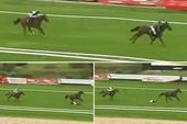 Hi hữu: Nữ VĐV ngã ngựa trên đường đua vì… ngựa