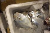 Bắt 4 tấn cá không rõ nguồn gốc trong đêm
