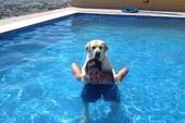 Những điều đáng học từ chó cưng