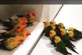 Bầy chim chia phe để... 'cãi nhau'