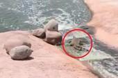 Cá sấu chơi... trượt nước