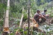Phú Yên tạm dừng dự án phá rừng nuôi bò