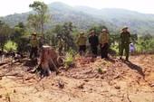 Phát hiện lượng lớn gỗ nghi từ phá rừng ở Bình Định