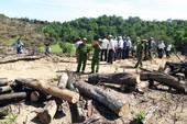 Bắt 2 người thuê phá hơn 60 ha rừng ở Bình Định