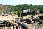 Xem lại mức kỷ luật với kiểm lâm để mất 60 ha rừng
