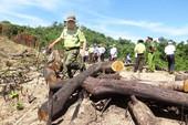 Bắt giám đốc chủ mưu phá 61 ha rừng