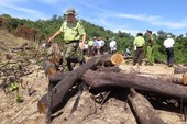 Yêu cầu xử lý trách nhiệm vụ phá rừng ở Bình Định
