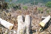 Phú Yên: Phá rừng đặc dụng không thể cho hưởng án treo