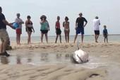 Cá mập trắng 'đi lạc' lên bờ, được giải thoát khi còn thoi thóp