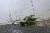 Cây đổ, thuyền du lịch chìm, nhà cửa tan hoang sau bão