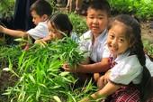 Chương trình GD tổng thể: Tiểu học sẽ học những gì?