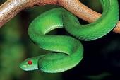 Tới mùa mưa lũ, nạn nhân bị rắn độc cắn tăng mạnh