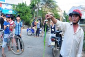 Quảng Ngãi: Số người bị rắn lục cắn lên 135 trường hợp