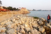 Dự án lấp sông Đồng Nai: 'Nên rút giấy phép để chờ tham vấn'