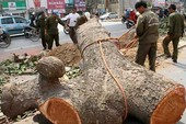 Chặt cây ở Hà Nội