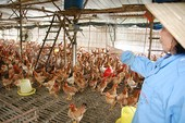 Nông nghiệp 'căng sức' đổi mới trước TPP
