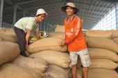TQ siết chất lượng, gạo Việt lo lắng