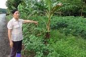Vụ UBKT huyện ủy 'tuyên án' thay tòa: Tỉnh ủy Bình Phước sẽ vào cuộc làm rõ