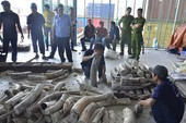 Phát hiện gần 1 tấn ngà voi tại cảng Cát Lái
