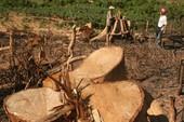 Kiểm điểm một phó chủ tịch huyện để xảy ra phá rừng
