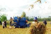 ĐBSCL đã triển khai 250.000 ha cánh đồng lớn