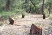 HTX cho người phá rừng phòng hộ, dân vây đưa về xã