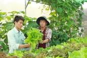 Tạm bỏ nghề đạo diễn để trồng rau sạch
