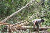 Công văn hỏa tốc về dự án phá rừng nuôi bò ở Phú Yên