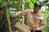 Gay cấn việc 'trục xuất' ong khỏi rừng U Minh