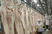 Cấm nhập khẩu để giải cứu thịt heo: Nên không?