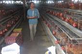 400 tấn thịt gà đầu tiên của Việt Nam 'bay sang Nhật