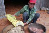Đề nghị xử lý chủ tịch huyện vụ phát giống đậu dỏm