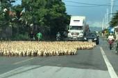 Khi vịt chặn đầu xe, cản trở giao thông.