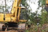 Vụ phá rừng nuôi bò: Phú Yên nói 'còn xem xét'
