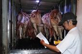 Chở hơn ký thịt bò ra khỏi tỉnh phải có hóa đơn?
