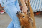 Đánh bả giết chó: Coi chừng bị xử hình sự