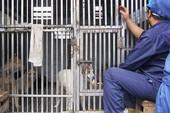 Chó vô chủ có thể phục vụ cho khoa học