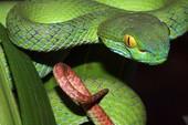 Những điều cần làm khi bị rắn độc cắn