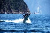 Từ 16-4, đến Nha Trang 'cưỡi cá mập' lướt sóng biển