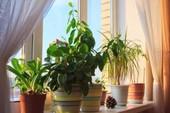 Cách giữ nhà mát mẻ trong mùa nóng không cần máy lạnh
