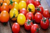 Cà chua đỏ và cà chua vàng, loại nào tốt hơn?