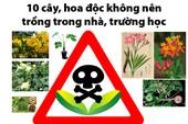10 cây, hoa độc không nên trồng trong nhà, trường học