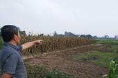Hà Nội đồng ý chuyển 2.250 ngôi mộ vào khu dân cư